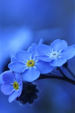 Preview iPhone wallpaper Blue flowers macro photography, forget-me-not