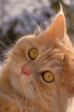 iPhone обои Кошка поднимается, лицо, смотреть