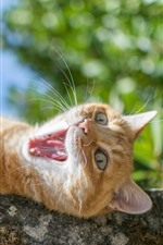 Preview iPhone wallpaper Cat yawn, teeth, face, rest