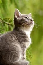 Preview iPhone wallpaper Cute little kitten, cat, look, green background