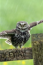 Preview iPhone wallpaper Cute little owl, wings, wood, rainy