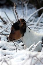 Cachorrinho bonito, inverno, neve