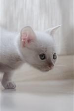 Aperçu iPhone fond d'écranChaton blanc mignon, chat, look, brumeux