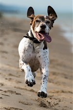 Preview iPhone wallpaper Dog running, beach, sea