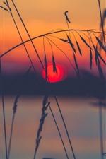 Grama, pico, lago, silhueta, pôr do sol
