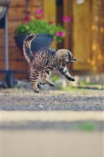 iPhone壁紙のプレビュー 子猫の遊んで、ジャンプ