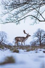 预览iPhone壁纸 孤独的鹿,冬天,雪,树