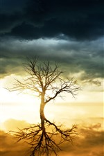 Preview iPhone wallpaper Lonely tree, sky, lake, water reflection, clouds, sunset