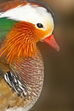 Preview iPhone wallpaper Mandarin duck, colorful feathers, head, bird