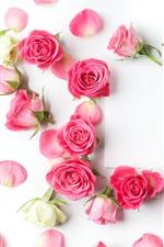 Vorschau des iPhone Hintergrundbilder Viele rosa und weiße Rosen, Blütenblätter, romantisch