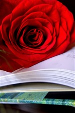 Preview iPhone wallpaper One red rose, petals, book