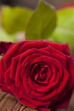 Preview iPhone wallpaper One red rose, petals, gift, romantic