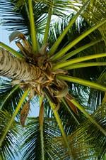 Palmeira, folhas, caule