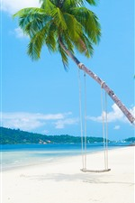 Palmeiras, praia, mar, balanço, ilha, tropical