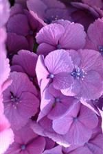 iPhone壁紙のプレビュー ピンクのアジサーマクロ写真