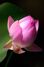 Preview iPhone wallpaper Pink lotus bud, green leaf, flower close-up