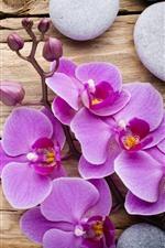 Preview iPhone wallpaper Pink phalaenopsis, flowers, petals, stones, wood board