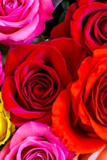 Красные, желтые, розовые розы, лепестки