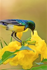 iPhone обои Солнечная птица, птица, желтые цветы, зеленые листья