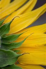 iPhone壁紙のプレビュー ひまわりの背面図、黄色の花びら