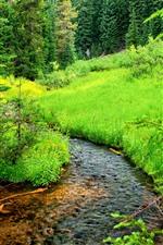 iPhone壁紙のプレビュー 木、草、緑、小川、自然の風景