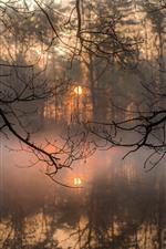 Vorschau des iPhone Hintergrundbilder Zweige, Fluss, Nebel