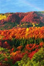 Preview iPhone wallpaper Ukraine, Carpathians, beautiful autumn, red, yellow, green