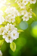 Preview iPhone wallpaper White apple flowers bloom, twigs, spring, sun rays