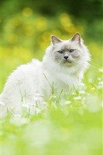 Белый кот, оглядываясь назад, полевые цветы, зеленая трава