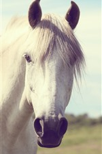 Preview iPhone wallpaper White horse, face, mouth, eyes, mane