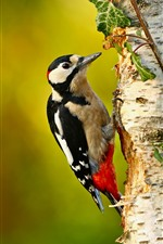 Preview iPhone wallpaper Woodpecker, bird, tree, leaves