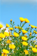 Preview iPhone wallpaper Yellow flowers, wildflowers, blue sky, spring