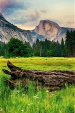 Aperçu iPhone fond d'écranParc national de Yosemite, arbres, montagnes, bois, USA