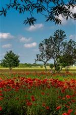 Vorschau des iPhone Hintergrundbilder Austin, rote Mohnblumenblumen, Bäume, USA