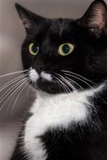 Close-up do gato preto, olhos verdes, orelhas, rosto