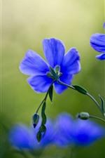 Preview iPhone wallpaper Blue flowers macro photography, petals, stem