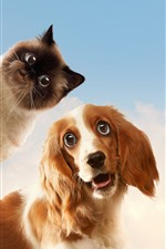Cão e gato, olhar, rosto, céu, nuvens