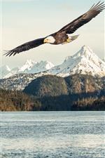 Águia, asas, vôo, lago, árvores, montanhas, neve