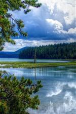 iPhone обои Восточное озеро, деревья, природа, США