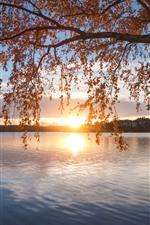 Finlândia, lago Saimaa, árvore, outono, pôr do sol