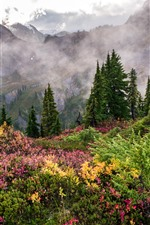 Preview iPhone wallpaper Forest, grass, trees, mountains, clouds, fog, nature