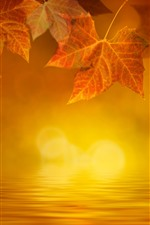 iPhone обои Золотая осень, кленовые листья, вода, туман