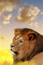 Preview iPhone wallpaper Lion look back, wildlife, clouds
