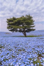 Preview iPhone wallpaper Lonely trees, many blue flowers