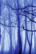 Preview iPhone wallpaper Morning, forest, trees, fog, light blue