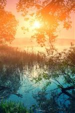 iPhone обои Утро, озеро, деревья, трава, восход солнца, красивая природа пейзаж