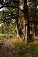 Aperçu iPhone fond d'écranPays-Bas, arbres, herbe, forêt, automne