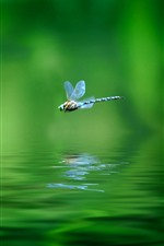 Preview iPhone wallpaper One dragonfly, flight, water, green