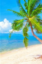 Preview iPhone wallpaper One palm trees, blue sea, beach, clouds, tropical