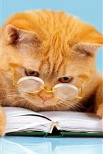 Preview iPhone wallpaper Orange cat reading book, glasses, funny animal